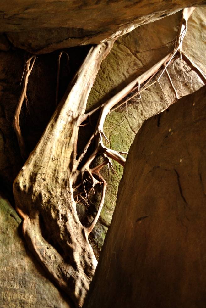 Giant looming tree in the first cave at Edakkal.