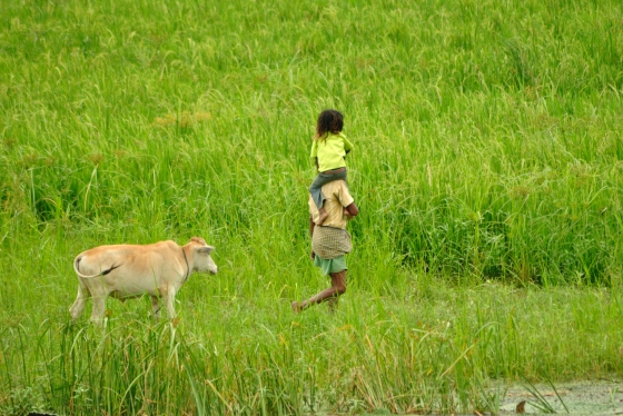 A father-daughter moment in one of the many fields near Pobitora Wildlife Sanctuary.