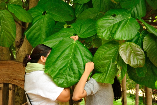 Another effective way of distracting people - shoot tons of weird photos. In this picture, a cousin and I were fooling with the classic theme of love as shown in 80s cinema. We found this leaf from the Fig tree big enough to cover both our faces!
